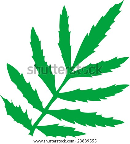 vector illustration of green leaf - stock vector