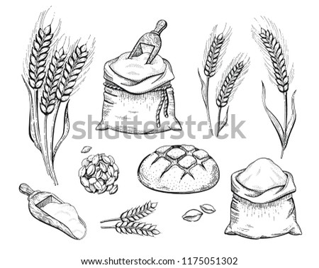 Sukkot Seamless Pattern Background. Etrog, Lulav Hadas And Arava... Royalty  Free Cliparts, Vectors, And Stock Illustration. Image 64188439.