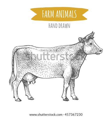 Vector illustration of hand drawn cow, isolated on white background. Farm animals collection.