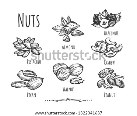 Vector illustration of healthy, wholesome food, snack set. Different types of peeled and crushed nuts such as pecan, walnut, peanut, pistachio, cashew, almond, hazelnut. Vintage hand drawn style.