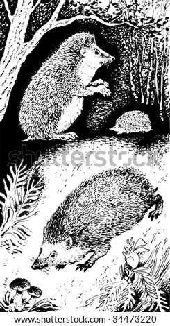 Vector illustration of hedgehogs in the forest