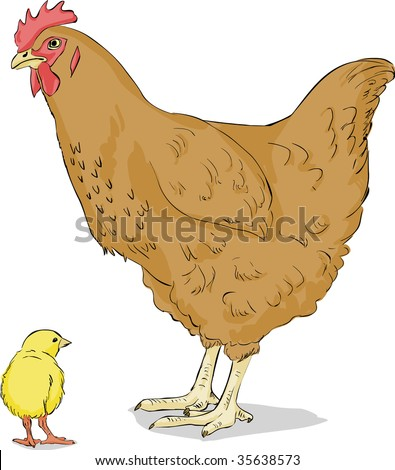 vector illustration of hen with chicken