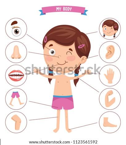 Vector Illustration Of Human Body Stock photo ©