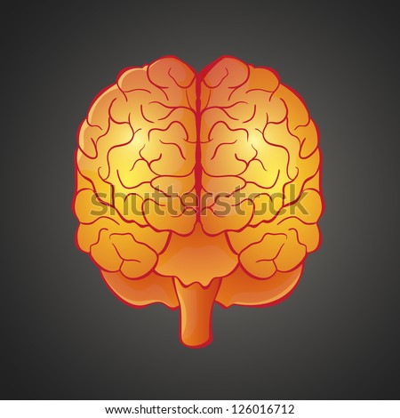 Vector  illustration of human organ brain front view in bright colors