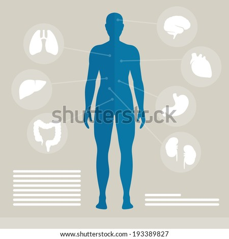 vector illustration of human