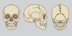Vector illustration of human skull medical anatomy vector pack
