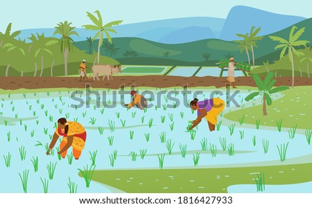 Vector Illustration Of Indian Rice Fields With Workers.Farmer Plowing Field With Pair Of Oxen, Carrying Rice Plants For Planting. Women Working In Rice Field. Authentic Traditional Agriculture.