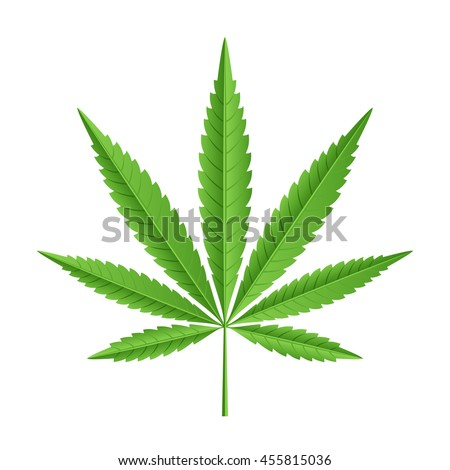 Vector illustration of leaves of marijuana cannabis plant