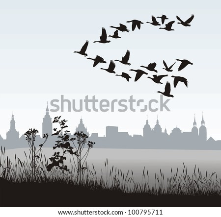 vector illustration of migratory wild goose silhouette of the historic town