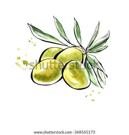 vector illustration of olives