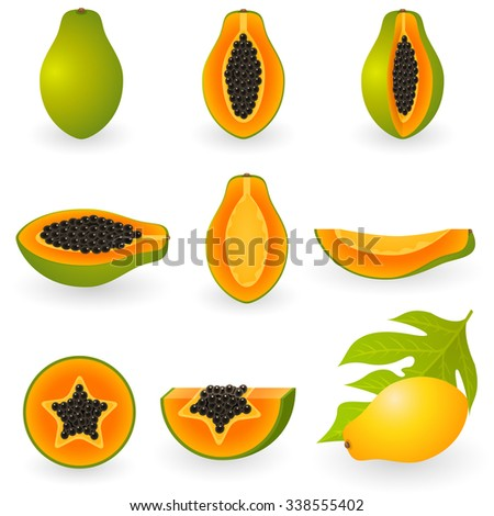 vector illustration of papaya