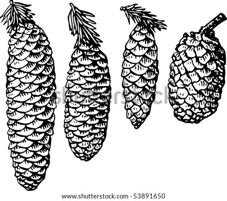 vector illustration of pinecone