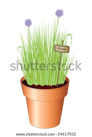 stock-vector-vector-illustration-of-potted-chives-isolated-on-white-background-also-available-as-jpg-24617032.jpg