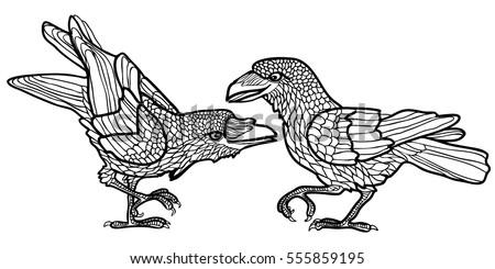 vector illustration of ravens