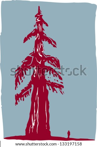 vector illustration of redwood