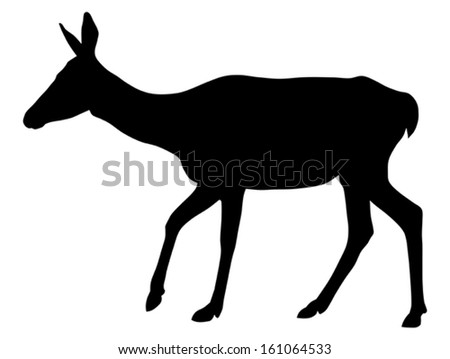 Vector illustration of roe silhouette