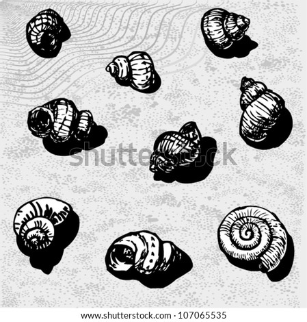 Sea Snail Drawing of Sea Snails