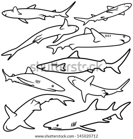 Vector illustration of shark collection isolated on white background.