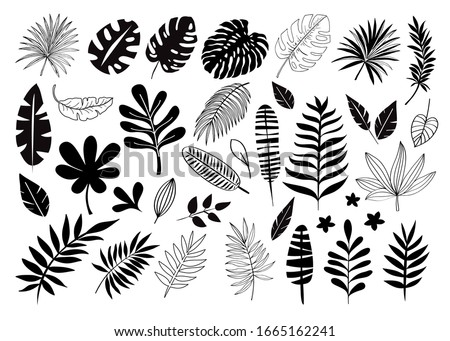 Apple Clipart Black And White Leaf Clipart Black And White Stunning Free Transparent Png Clipart Images Free Download