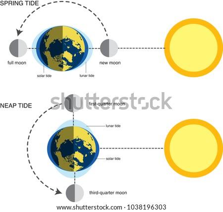 vector illustration of spring tide and neap tide (diagram)