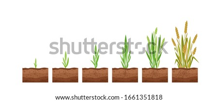 vector illustration of stages