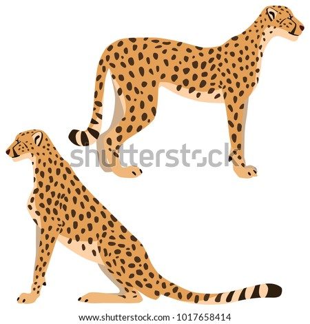 Vector illustration of standing and sitting cheetahs isolated on white background #1017658414