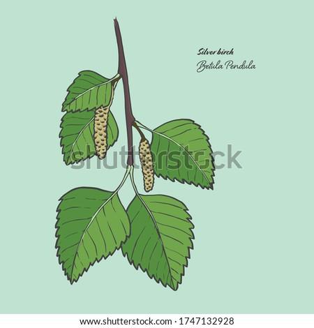 vector illustration of the leaf