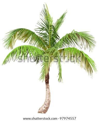 Vector illustration of the palm tree / Eps10