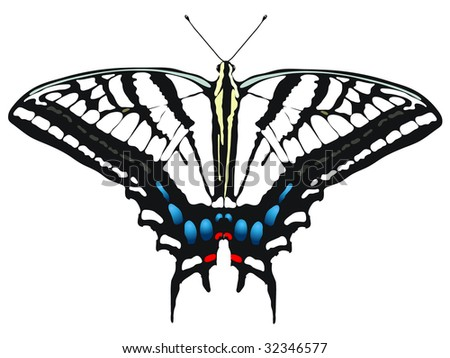 vector illustration of Tiger Swallowtail Butterfly