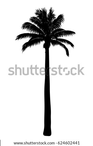 stock-vector-vector-illustration-of-tropical-palm-silhouette-eps