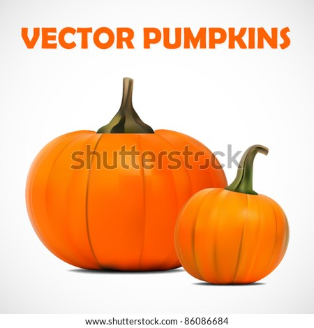 vector illustration of two beautiful pumpkins