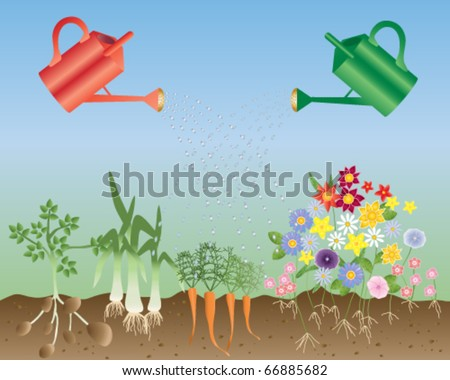 vector illustration of two watering cans one red and one green watering summer flowers and vegetables with above and below ground view of plants in eps10 format