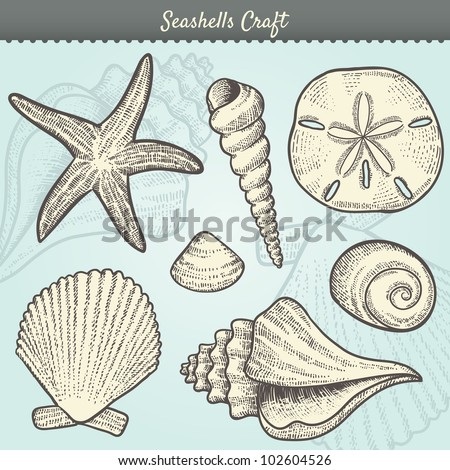 Vector Illustration of various sea shells doodled in a vintage style. Includes conch shell, spiral, clam, sand dollar, sea star, and others. Tropical beach clip-art. Eps10