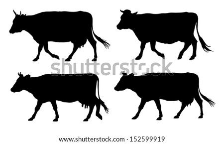Vector illustration of walking cows silhouettes
