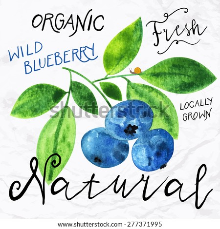 Vector illustration of watercolor wild blueberry hand drawn in in 1950s or 1960s style Concept for farmers market organic food natural product design soap package herbal tea antioxidants etc
