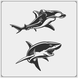 Vector illustration of White shark and Hammerhead shark.