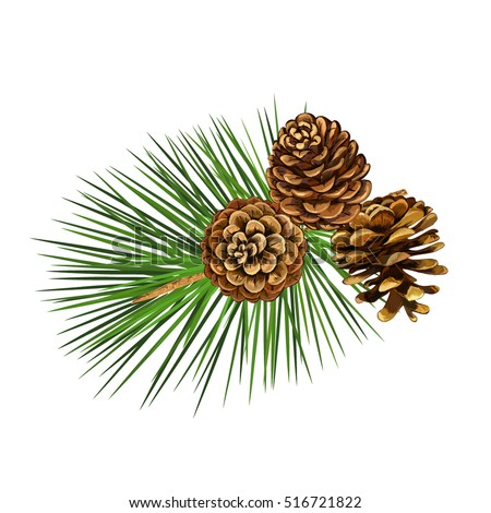 Vector illustration. Pine tree branch. New Year decor. Winter holidays design elements.Pine cone.