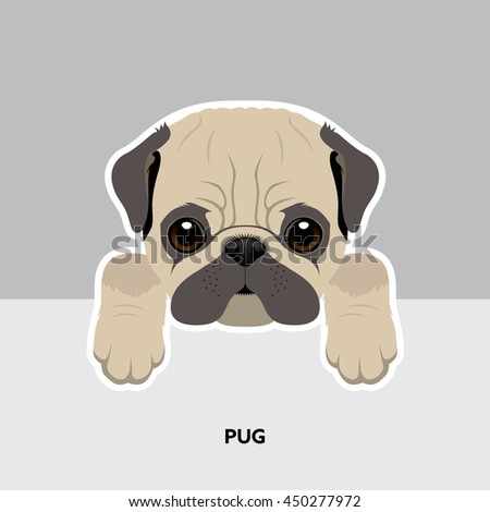 Stock Photo Vector Illustration Portrait of Pug Puppy. Dog isolated