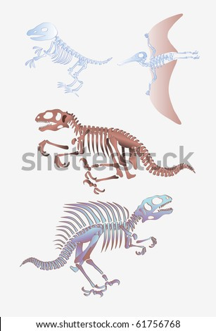 vector illustration, prehistoric skeletons, cartoon concept, white background.