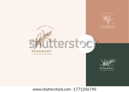 Vector illustration rosemary branch - vintage engraved style. Logo composition in retro botanical style Stock photo ©