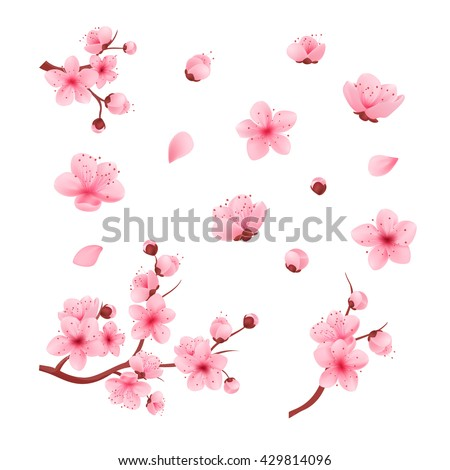 vector illustration sakura