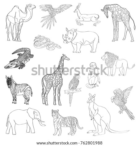 Vector illustration. Set of animals, parrot, giraffe, monkey, gazelle, elephant, rhinoceros kangaroo camel lion zebra crocodile snake tiger Black line