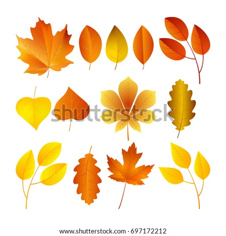 Vector illustration, set of bright autumn leaves.