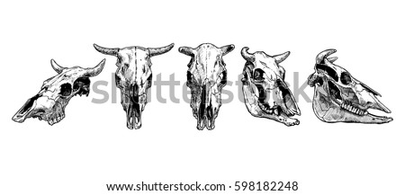 vector illustration set of bull