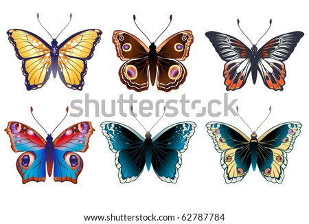 Vector Illustration set of detailed Brightly colored butterflies.
