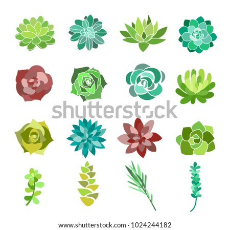 Vector Illustration Set Of Green Succulent And Cactus Flowers Desert Plants Top View Isolated On
