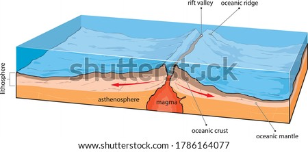 vector illustration shows