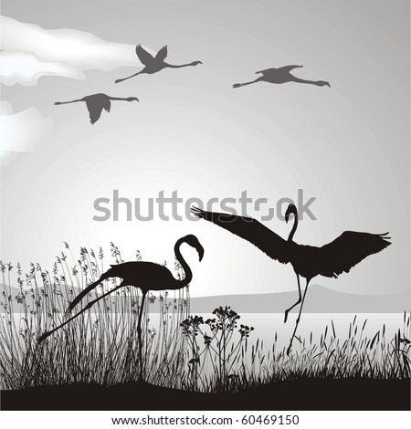 Vector illustration silhouettes black birds in nature