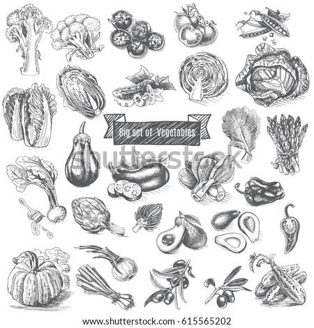 Vector illustration sketch - big set of vegetables.