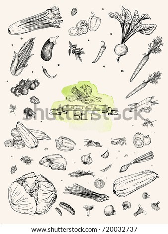 Vector illustration. Sketch drawn vegetables : carrot, beet, pepper, celery, pea, onion, cabbage, tomato, zucchini, eggplant, corn. Pen style vector objects.